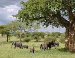 What do elephants eat in the forest?